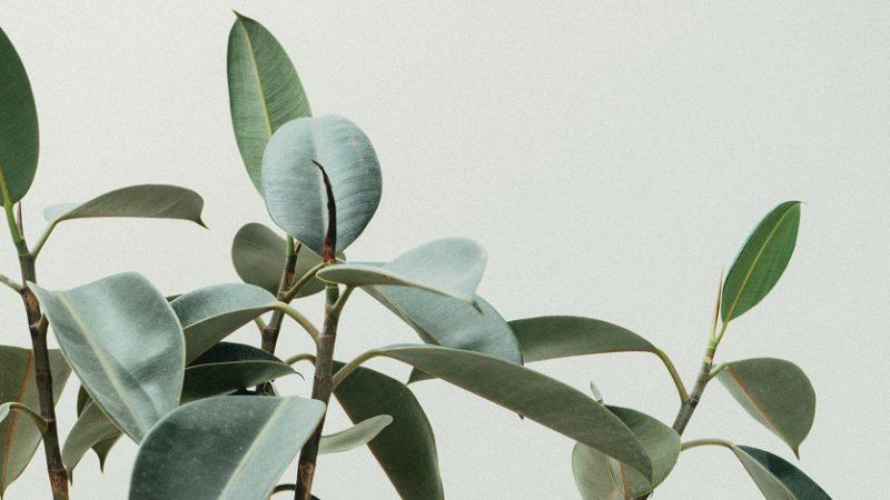 Prečo si zaobstarať izbové rastliny? Toto sú ich výhody